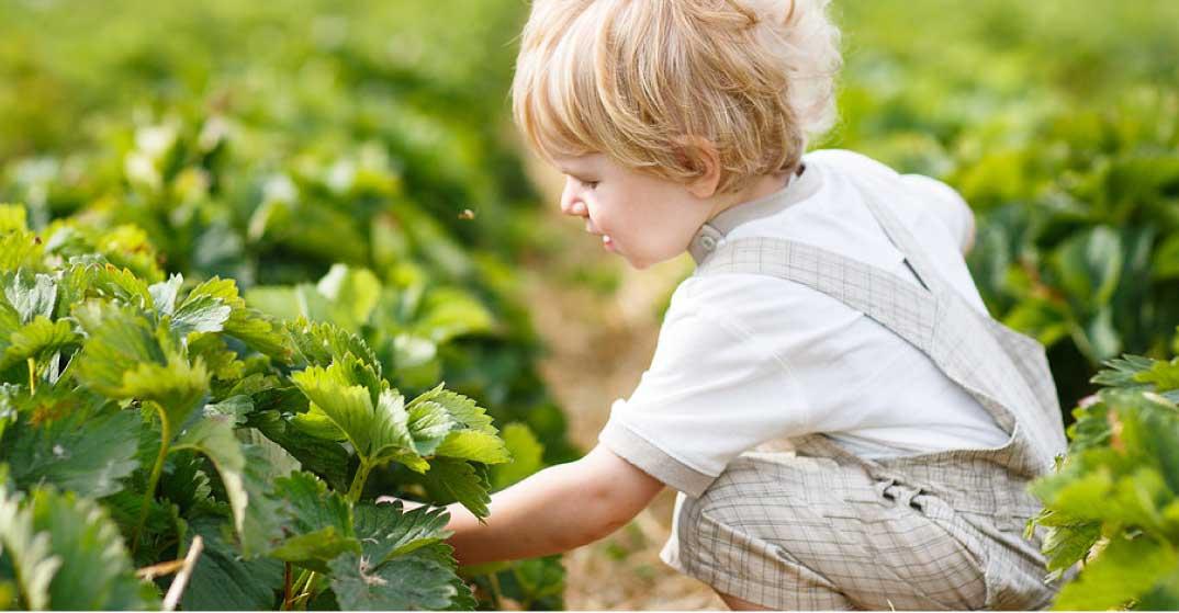 Nutrición infantil   Dieta saludable para los niños